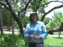 Herb Bahçe: Tıbbi Kullanım İçin Aloe Vera Ve At Kuyruğu