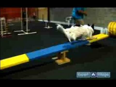 Çeviklik Eğitim Köpekler İçin: Bkz: Testere Köpek Çeviklik Eğitim Sırasında Öğretmek