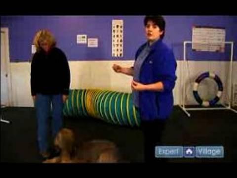 Köpek Komut Üzerine Gelmek İçin Nasıl Öğretmek İçin : Köpek Acil Hatırlama Öğretmek İçin Nasıl