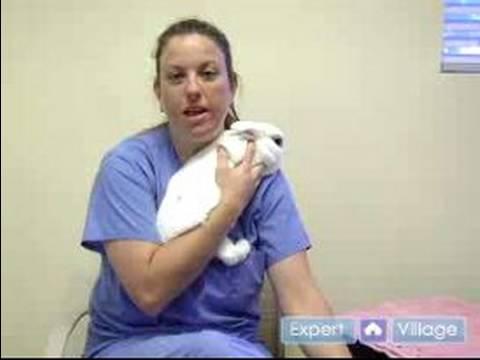 Evde Beslenen Hayvan Tavşan Bakımı: Senin Evde Beslenen Hayvan Tavşan Satın Alma