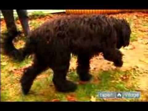 Nasıl Tren Bir Köpek Evi: Dışında Tuvalete Gidiş İçin Bir Köpek Ödül
