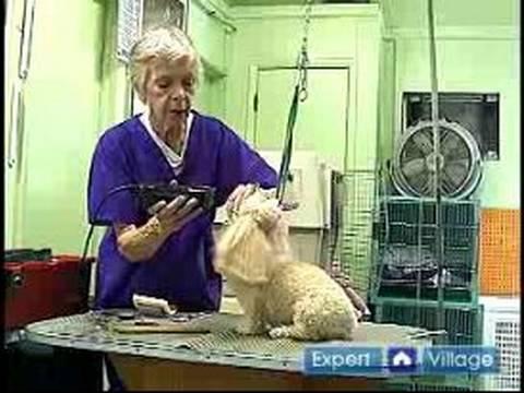 Nasıl Damat Uzun Tüylü Köpekler İçin: Nasıl Bir Shaggy-Kıl Köpek Onun Göz Çevresinde Damat