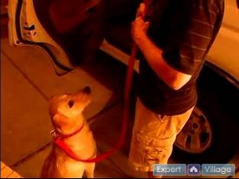 Kolay Ve Rahat Bir Köpek İle Seyahat : Köpek Ve Bir Araba Girmek Ve Çıkmak İçin Tren