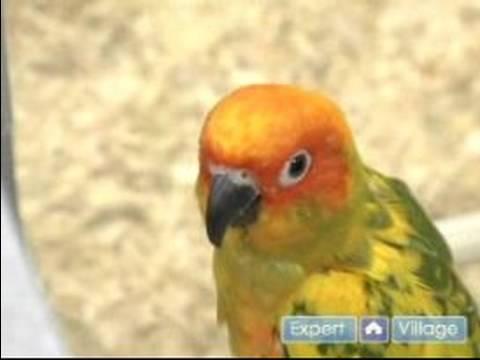 Nasıl Bir Evde Beslenen Hayvan Kuş Seçmek İçin: Evde Beslenen Hayvan Kuş İçin Hazır Olduğuna Emin Olun