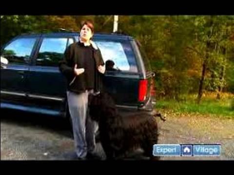 Nasıl-E Doğru Yürümek Senin Köpek: Nasıl Yürümek A Köpek