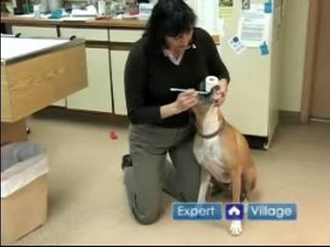 Acil Köpek Sağlık: Eğer Ne Yapmak Senin Köpek Boğuyor
