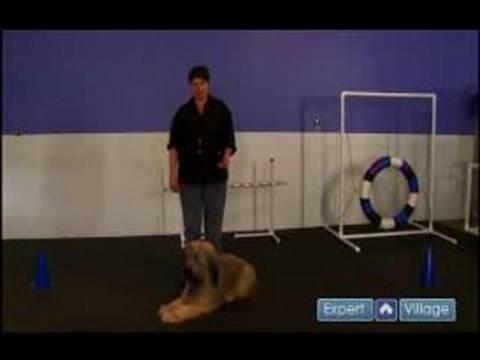 Bir Köpek Eğitmek İçin Nasıl Bir Tasma İle Yürümek İçin Bir Köpek Eğitmek İçin Nasıl
