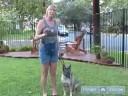 Köpek Eğitmek İçin Nasıl Bir Fişin Ne Temel Köpek Eğitimi Anlamak