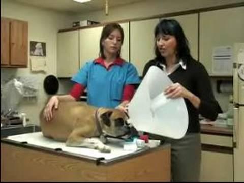 Acil Köpek Sağlık: Bir Köpeğin Kırık Tırnak Kırpma