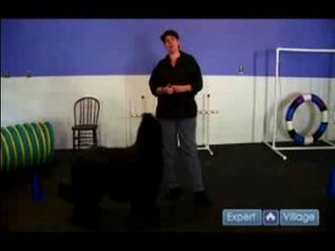 Nasıl Bir Köpek Yetiştirmek : Bir Köpek Geri Çağırma Komutunu Öğretmek