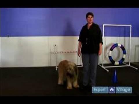 Nasıl Bir Köpek Yetiştirmek : Köpek Dur Komutu Öğretmek