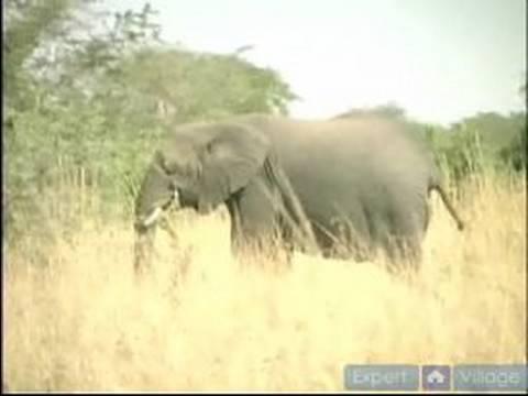 Afrika Vahşi Doğada Hayatta Kalmak Nasıl: Afrika Vahşi Yaban Hayatı Nasıl