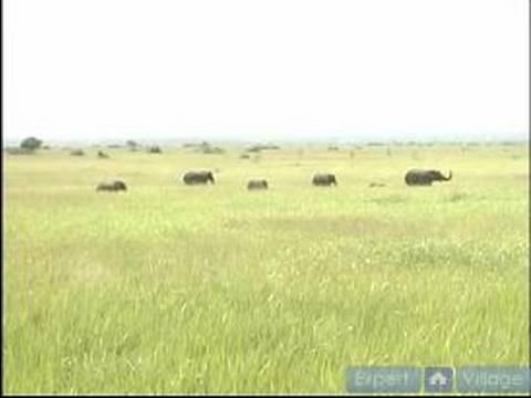 Afrika Vahşi Doğada Hayatta Kalmak Nasıl: Nasıl İçinde Afrika Vahşi Yırtıcı Önlemek İçin