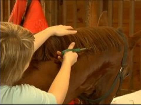 Nasıl Bir At Nalı Yele Band: Nasıl Bir At Yelesi Kırpmaya