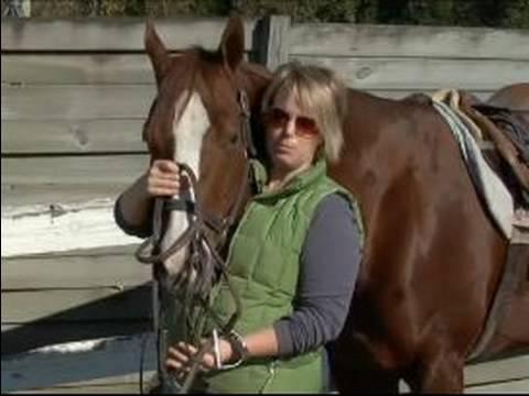 Nasıl Bir At İngiliz Tarzı Dizgin: İngilizce Bir Dizgin Konumlandırma