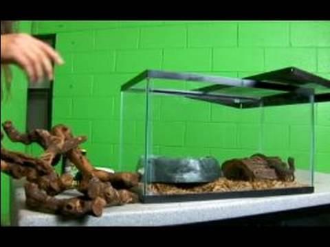 Tüm Sürüngenler Hakkında: Su Monitör: Bir Kertenkele Kafes Düzenlenmesi