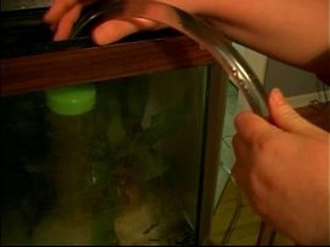 Balık Ve Tank Bakımı : Akvaryum Dolum Python Hortumla