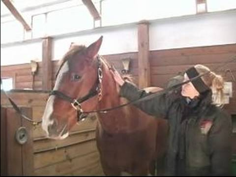 Nasıl Bir At Damat: At Üzerinde Bir Köri Tarak Kullanmayı