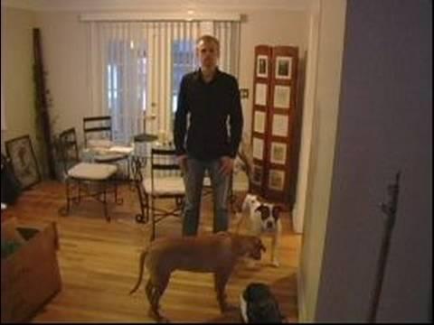 Köpek Eğitim İpuçları: Köpekler İle İlişkiler Oluşturmak İçin İpuçları