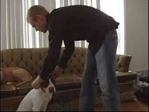 Köpek Eğitim İpuçları: Nasıl Bir Köpeğin Üstüne A Kira Kontratı Koymak