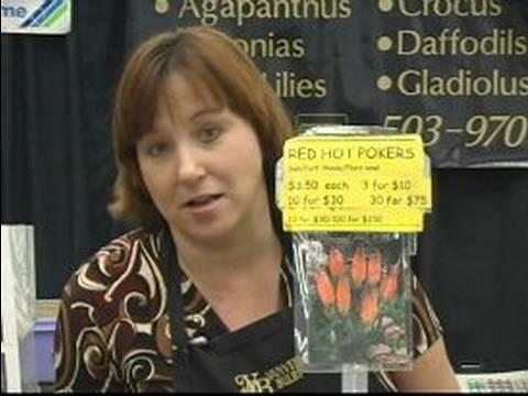 Güney Afrika Çiçek Soğanı : Egzotik Çiçek Soğanı Kniphofia