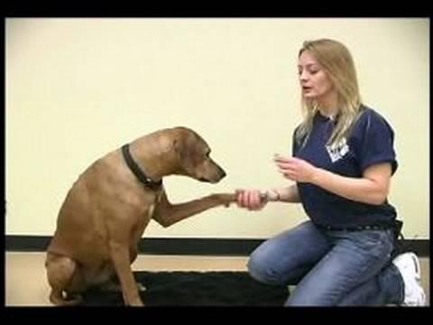 Köpek Hileci: Pençe Shake Köpek Hüner