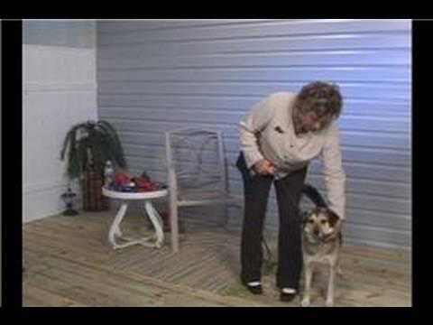 Köpek Eğitim İpuçları: Köpek Tasmasını Eğitim