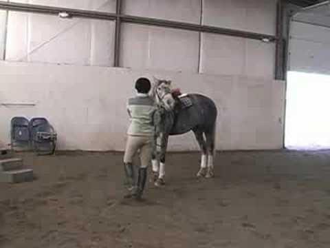 Bir At Üzerinde Jimnastik Bir Satır Atlama : Atlama Sonra Atını Soğumasını
