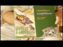 Kurbağalar Ve Sürüngenler İçin Bakım : Tespit Kurbağalar