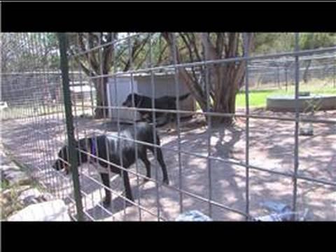 Pet Kabul Kurtarma : Yetişkin Bir Köpek Almak ...