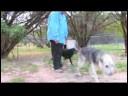 Pet Kabul Kurtarma : Bir Hayvan Barınağı Ziyaret