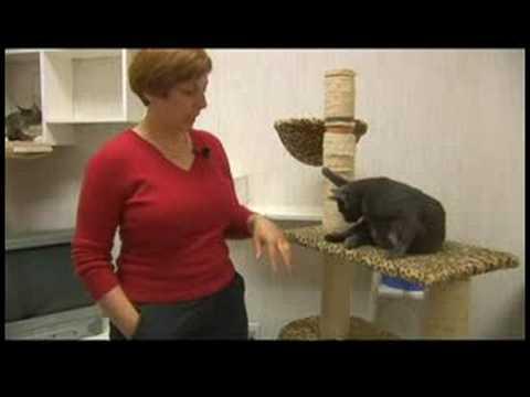 Çevre Zenginleştirme İpuçları Kedi: Kedi Çevre Zenginleştirme Gol