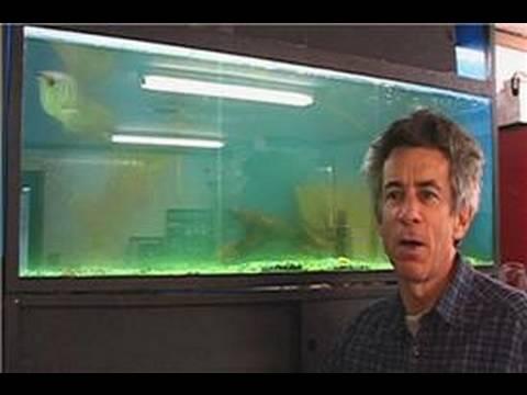 Akvaryum Bakımı : Balık Tank Bulutlu Su Temizleme