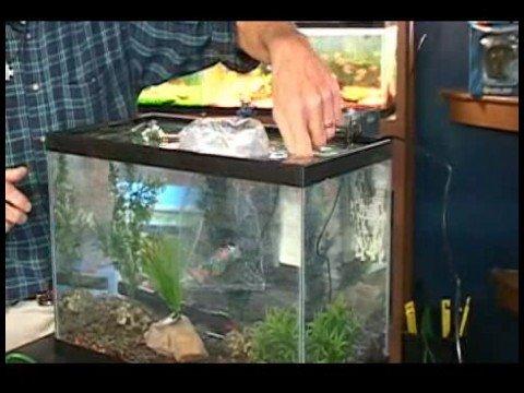 Akvaryum Seçimi : Akvaryum İçin Balık Ekleme