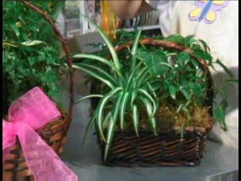 Bitki Hediye Sepetleri : Bitki Hediye Sepeti Aksesuarları