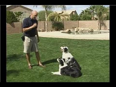 Bu Köpek Eğitim Komutu Bırak : Bırak Köpek Eğitim Komutu Kullanarak