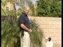 Köpek Eğitim Komutu : Köpek Görseller Komut Dışı Eğitim