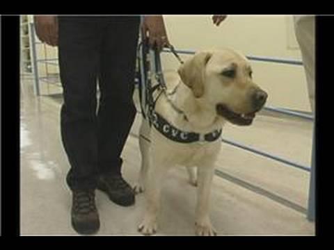 Rehber Köpek Eğitimi : Rehber Köpek Eğitimi: Erişim Ve Sınıflandırma