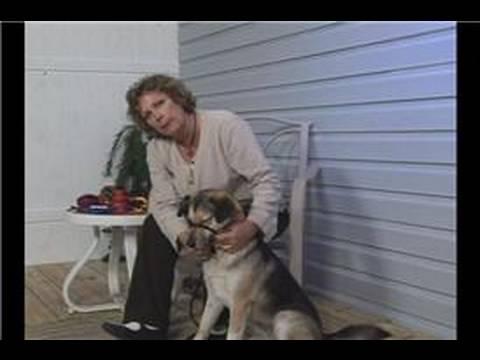Köpek Eğitim Tasmaları Ve Tasmalar : Nazik Lider Köpek Tasmaları