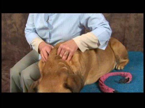 Köpek Omuz Artrit İçin Akupunktur : Artrit İçin Köpek Masaj: Boyun Masaj