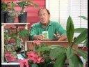 Tohum Yayılımı İle Büyüyen Sebze : Büyüyen Körpe Yeşil Çalı Fasulyesi