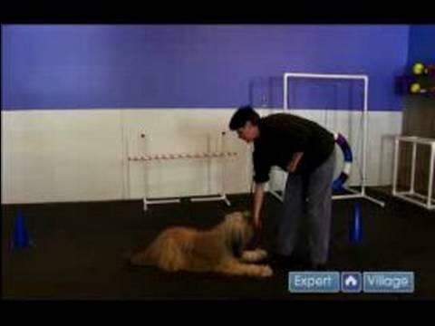 Nasıl Bir Köpek Yetiştirmek : Otur, Uzan İçin Köpek Down Ve Stand Öğretmek