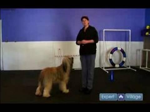 Nasıl Bir Köpek Yetiştirmek İçin Köpek Eğitim Dört Bileşenleri