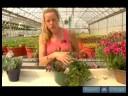 Nasıl Ev Bitkileri Su : Farklı Bitki Boyutları İçin Sulama İpuçları
