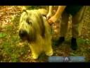 Senin Köpek Ormanda Yürüyüş: Senin Köpek Üstünde A Uzun Yürüyüş İçin Yiyecek Getiren