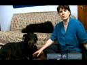 Yaşlı Köpekler İçin Bakım Nasıl : Yaşlı Köpekler İçin Yıllık Kontrolleri