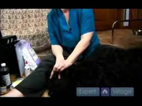 Köpek İlk Yardım : Nasıl Bir Köpek Bir Göz Enfeksiyonu Tedavi Etmek İçin