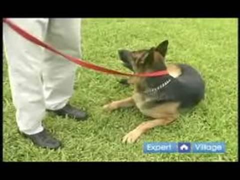 Temel Köpek Eğitim Teknikleri: İtaat Komut Kal