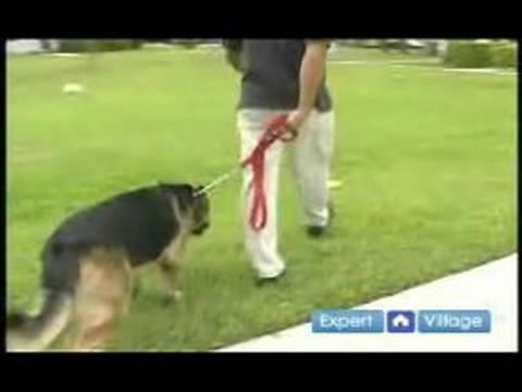 Temel Köpek Eğitim Teknikleri: İtaat Terbiye Kira Kontratı Teknikleri