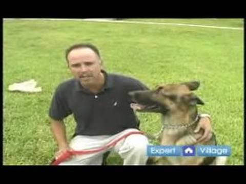 Temel Köpek Eğitim Teknikleri: Köpek Eğitmeni Seçmek İçin İpuçları